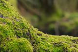 Moss on tree