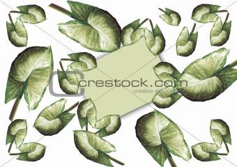 Framework-card from leaves Syngonium