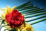 rose funneral