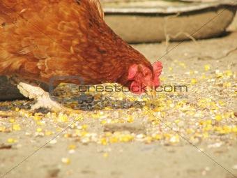 fowl-run