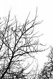Bare branches 1