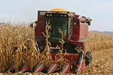 A Farmer Harvesting Corn