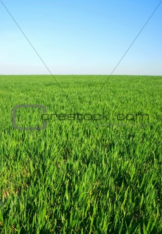 green grass on horzon with blue sky