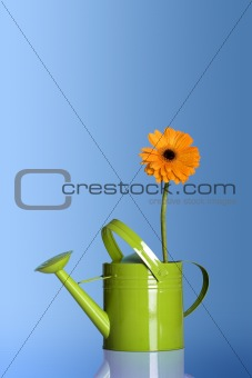 Watering can with a flower