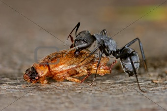 Ant and beetle