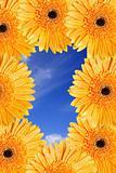 Bright Daisy Frame