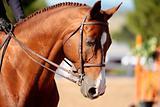 Elegant Horse Head in Morning Sunlight