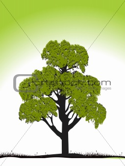 green tree silhouette isolated on green, vector