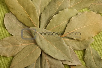 Bay leaves on green