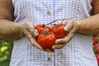 tomato and hands