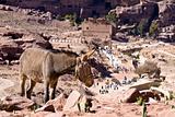 Petra - Jordan (Small Siq)