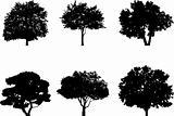 Silhouette a tree