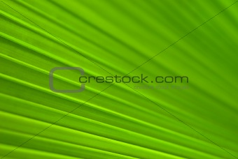 An abstract view of a Palm leaf