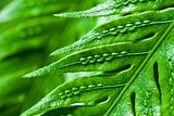 Abstract view of a fern leaf