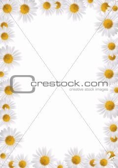 Frame made from daisies over white background