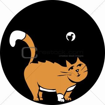 Cat in Pipe.