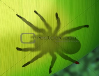 Rainforest spider hiding behind a leaf