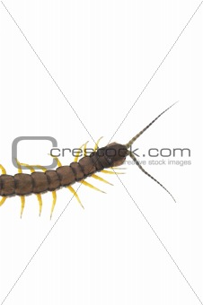 Centipede - Across