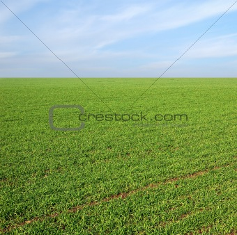clear blue sky over a green field
