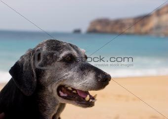 Old Dog