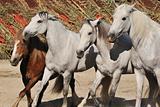 horses and pony