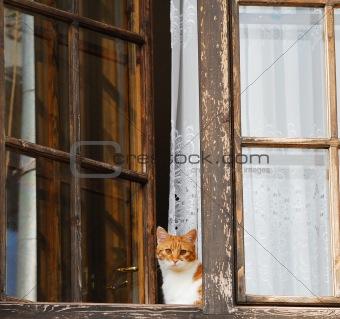 cat and window