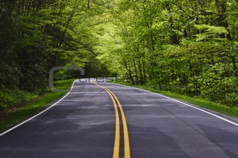 clean road with trees on both sides