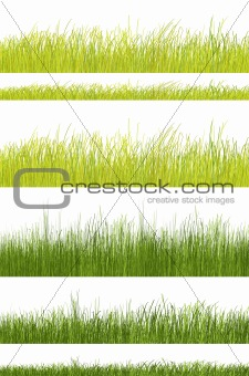 green grass pattern on white background