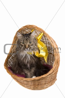 Cat in wicker basket.