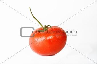 Bathed Tomatoe