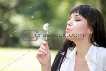 bloweing dandelion