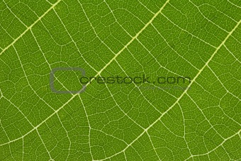 close up of delicate green leaf pattern