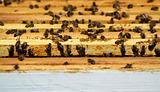 Bee hive