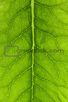 closeup detail of leaf