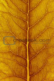 close up of delicate leaf pattern