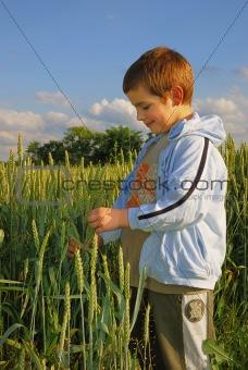 Boy in wheat
