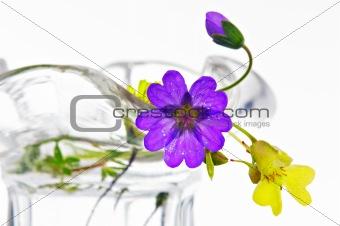tiny meadow flowers