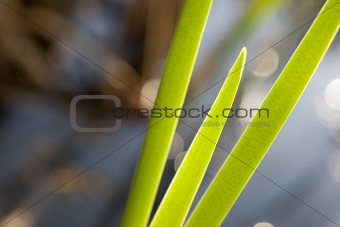 Cat Tail Close Up Abstract