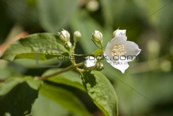 small white flower