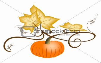 Autumn Pumpkin. - with clipping path