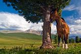 The grey gelding