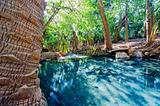 Relaxing Springs