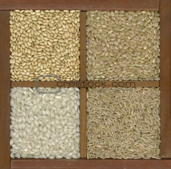 four rice grains in a box with dividers