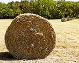 bale hay