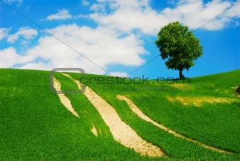Bright summer landscape with green field;tree and blue sky
