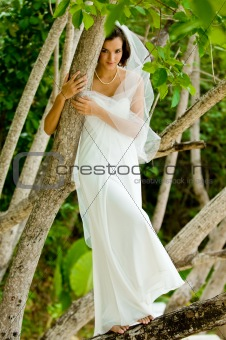 Bride In Tree
