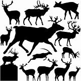 Vectoral Deer Silhouettes