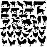 Vectoral Farm Animal Silhouettes