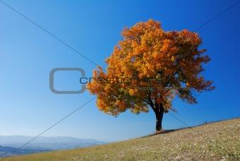 Bright fall tree