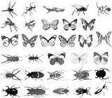 Various kind of insects